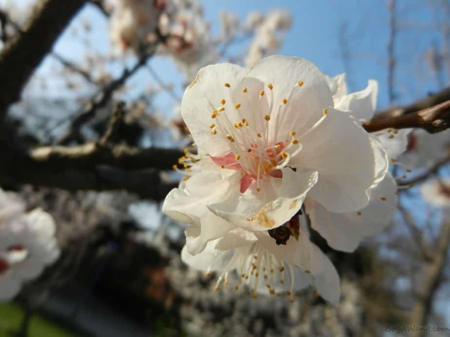 当春日渐暖